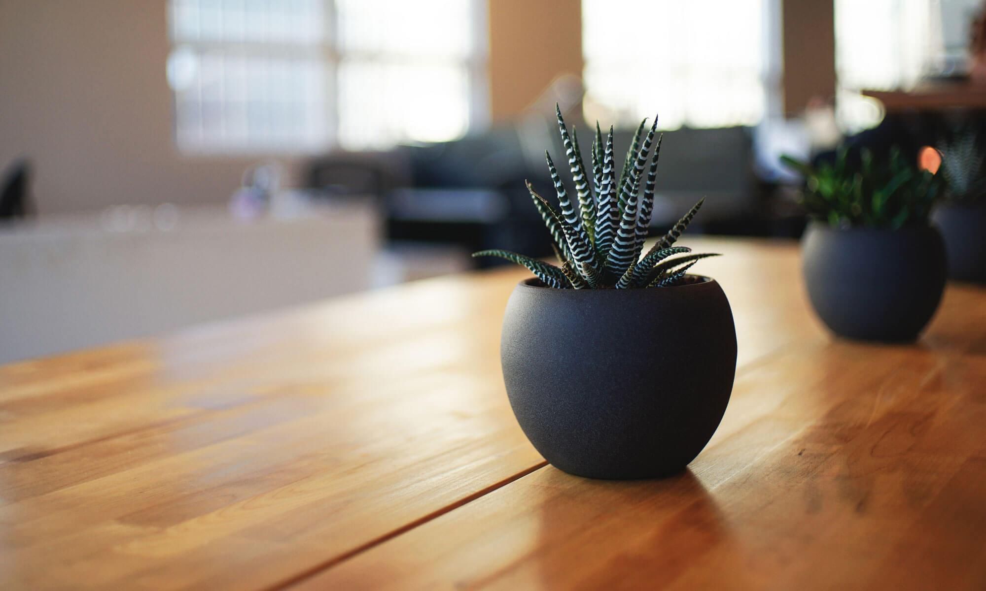 Green Furniture - pat tapitat, paturi tapitate cu spatiu depozitare